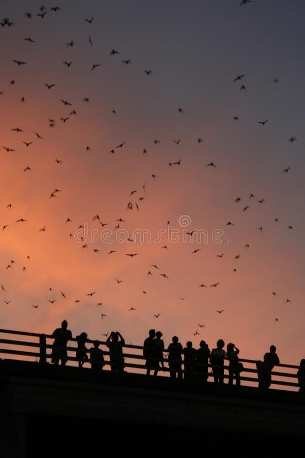 Download Bridge with bats stock photo. Image of sunset, bridge - 10992640
