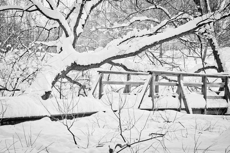 Bridge in a city park on a winter day black and white royalty free stock photography