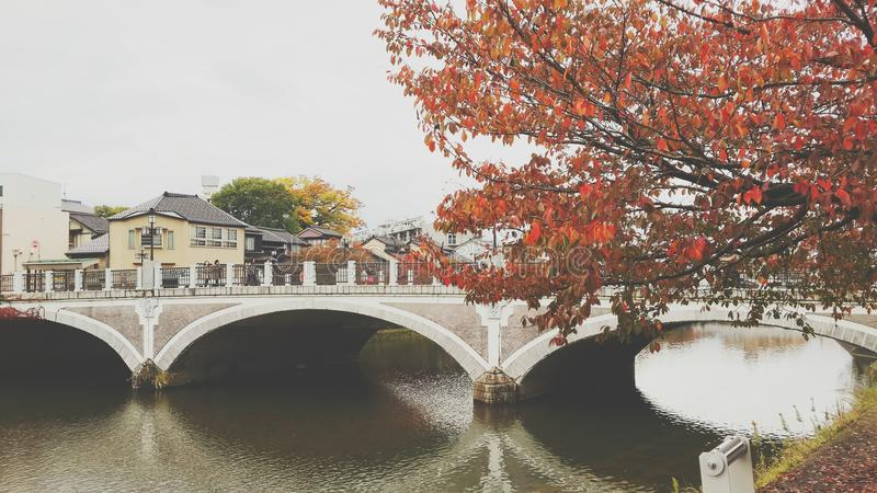 Bridge of color leaves royalty free stock photography
