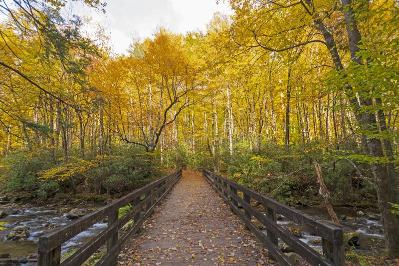 Bridge into the Fall Forest stock photo