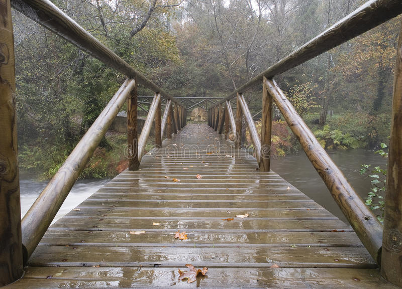 Download Bridge in the forest stock photo. Image of rainy, boardwalk - 28932642