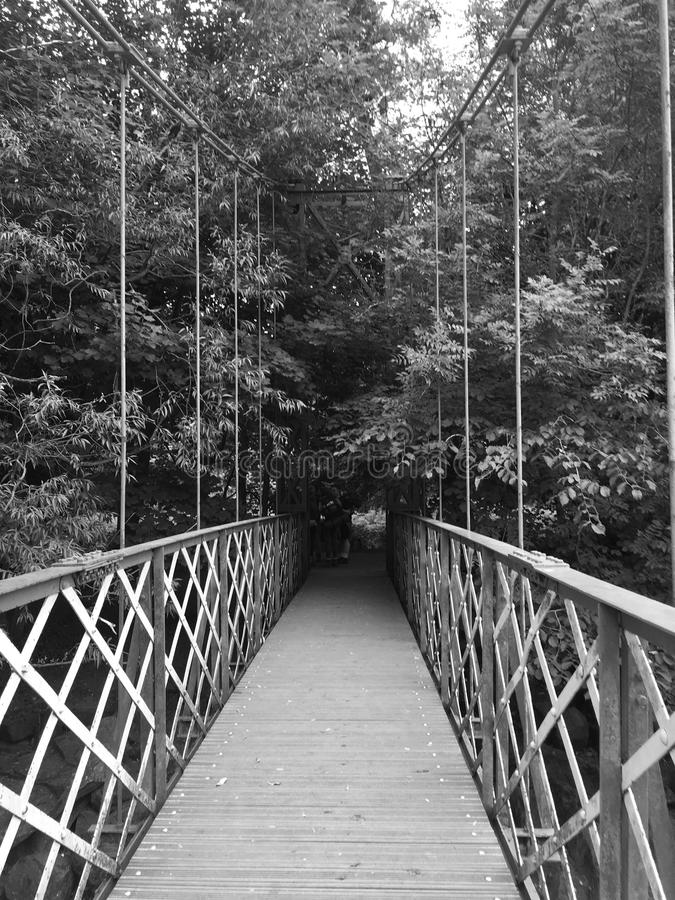 Bridge into the Forest royalty free stock images