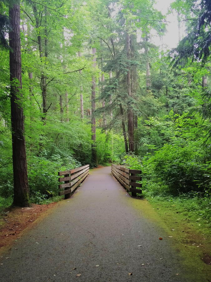 Bridge in the forest stock image