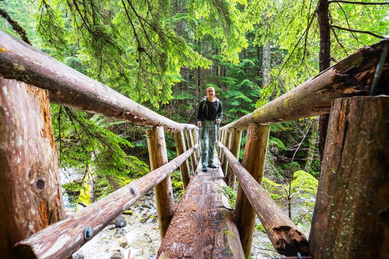 Bridge in the forest royalty free stock images