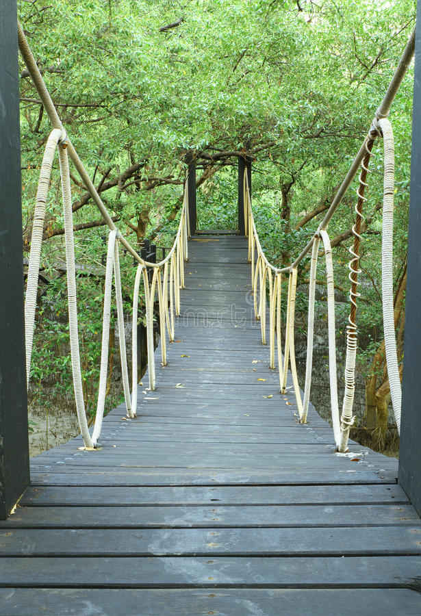 Download Bridge In Mangrove Conservation Center Stock Photo - Image: 22742946