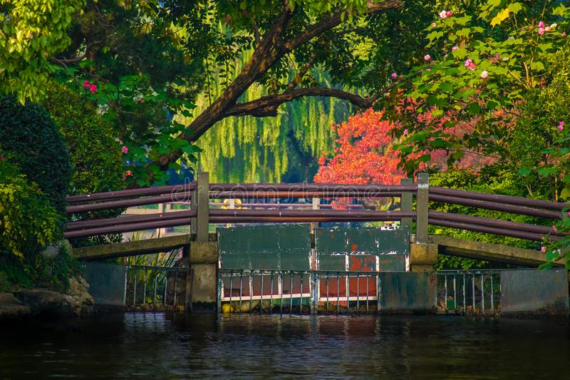 Bridge Near West Lake With Weeping And Flowering Trees In Hangzhou, China.  royalty free stock photos