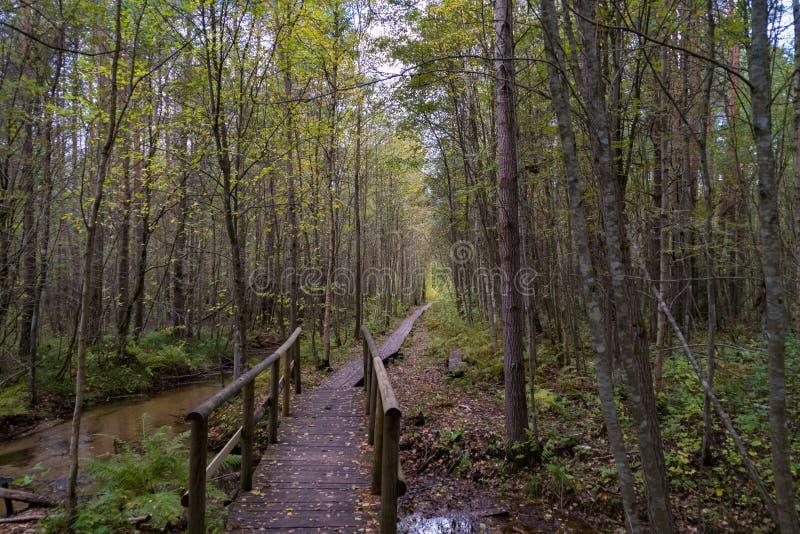 Bridge over the creek in autumn stock photo