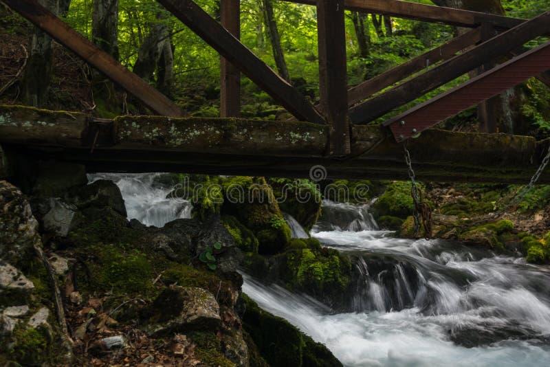 Bridge over Forest Stream. Montenegro stock photos