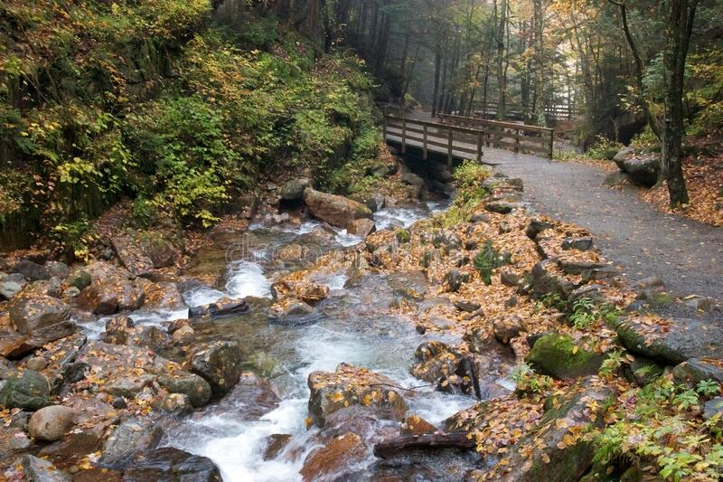 Bridge over forest stream stock images