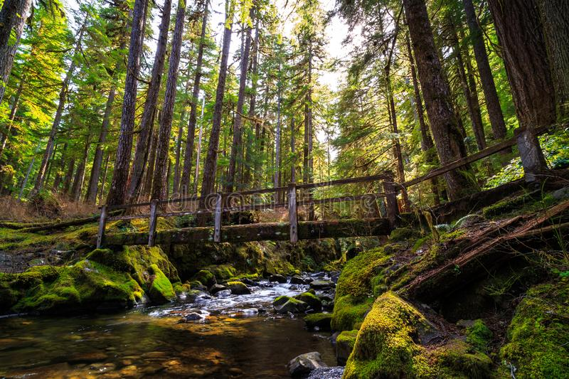 Bridge over the Stream, Sol Duc Wilderness at Olympic National Park. Washington stock photos