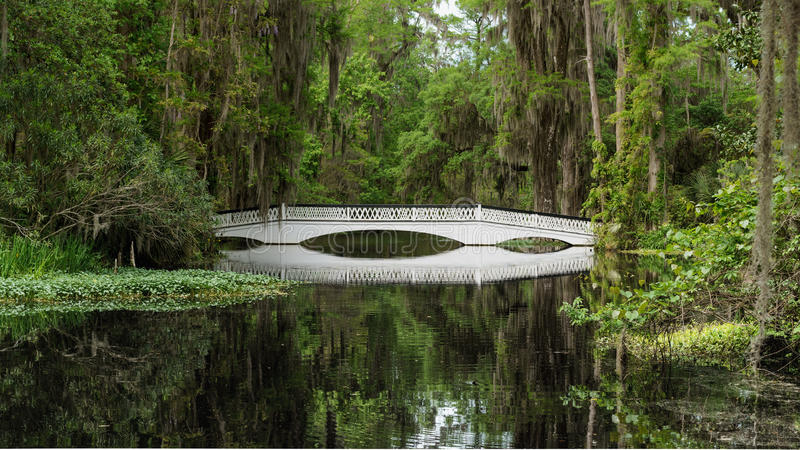 Bridge in a swamp. A white bridge in a swamp or plantation in the south with spanish moss hanging from trees. Reflection of the scene in the foreground water stock images