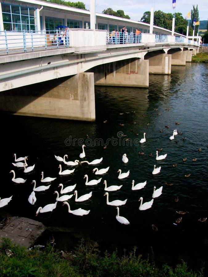 Bridge with swans stock photo