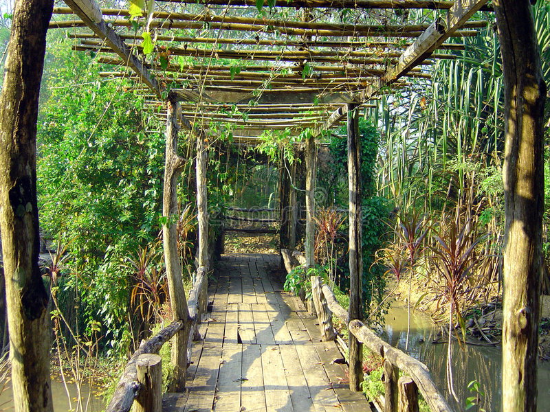 Bridge In Thai Jungle Stock Images