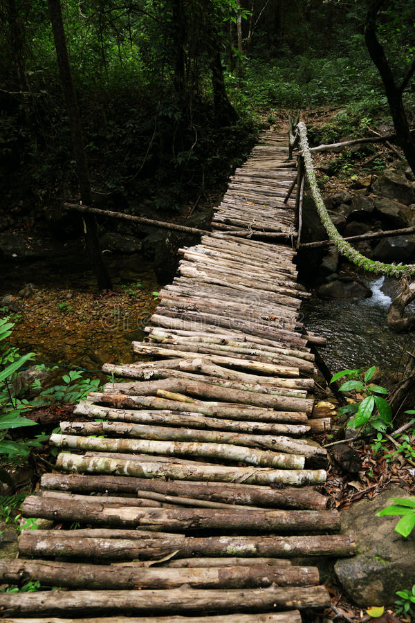 Download Bridge in tropical jungle stock image. Image of time - 26784665