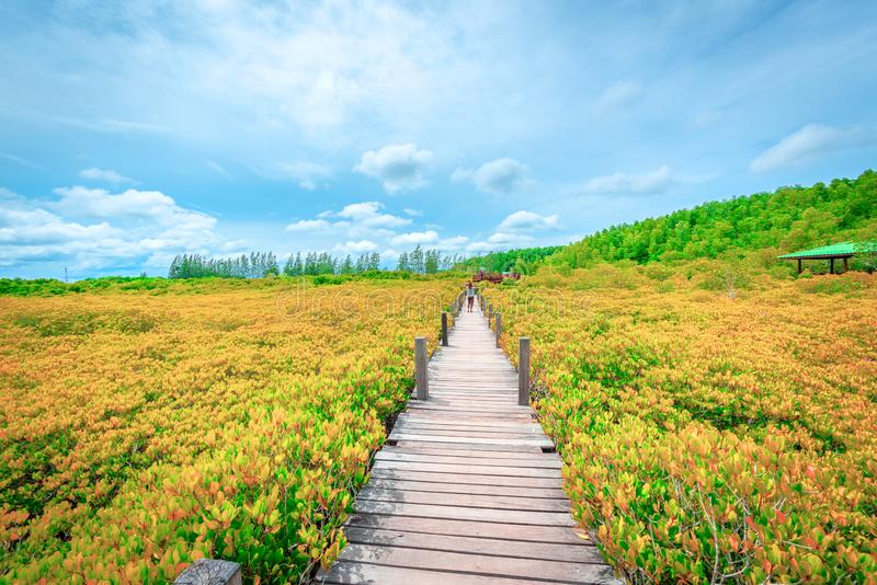 Wooden Bridge in Tungprongthong with cloud, mangrove forest at Nature Preserve and Forest Klaeng at Prasae, Rayong province,. Bridge in Tungprongthong with cloud stock photography