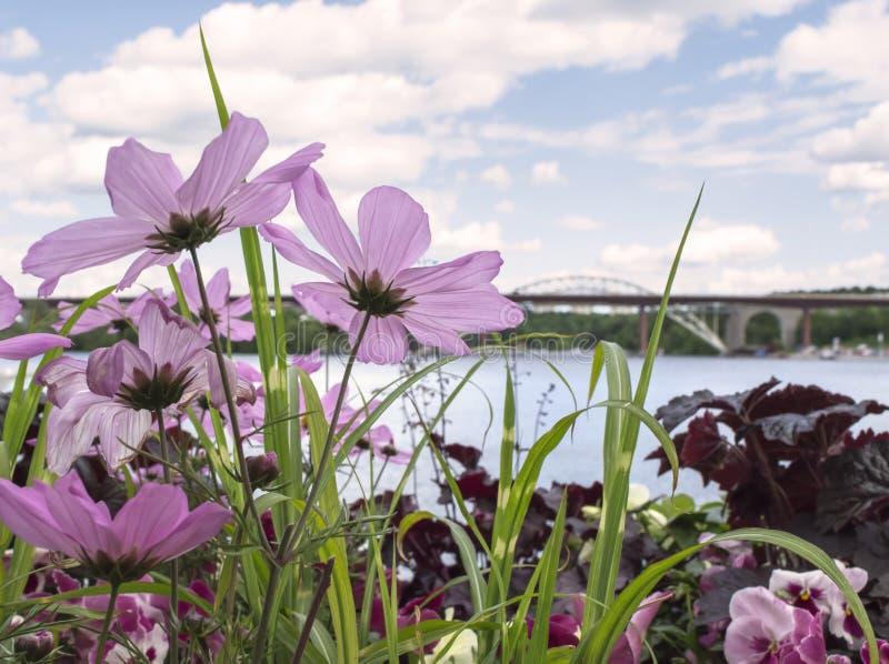 Bridge view through pink, delicate flowers. City bridge view through a plantation of pink, delicate flowers. Ã…rsta bridge, Stockholm stock images