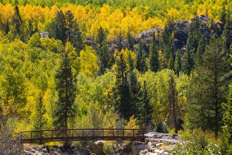 Bridge walk colorado aspen autumn fall colors stock image