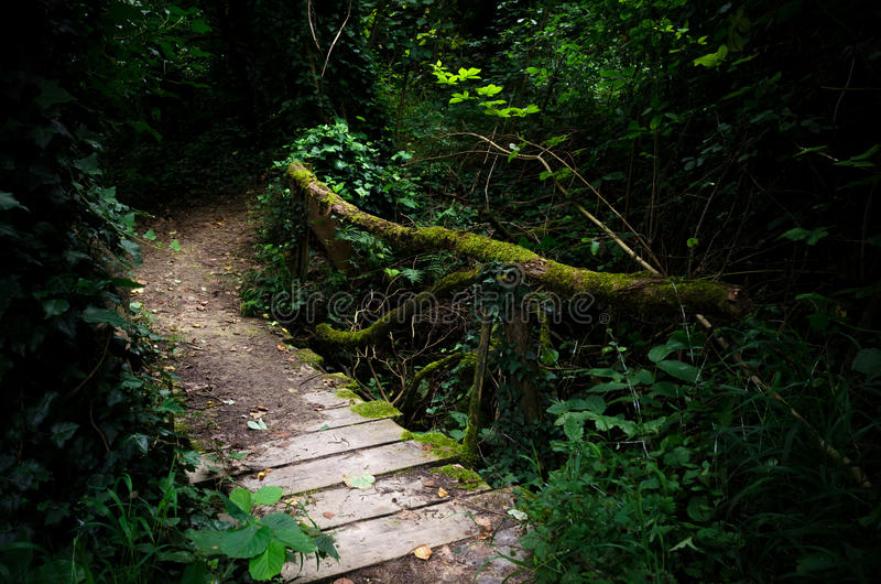 Bridge in the wood. Wooden bridge in a forest stock photo