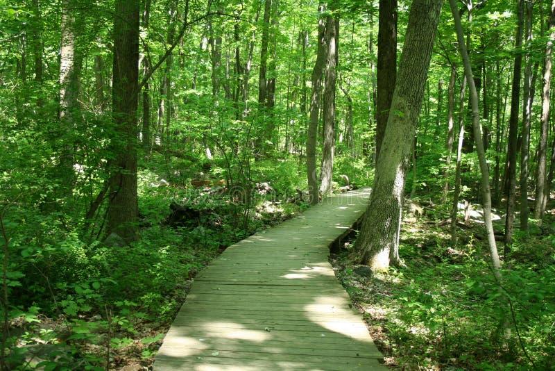 Bridge in woods stock image