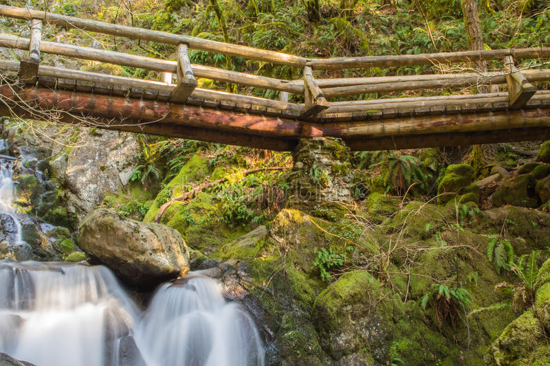 A bridge in the woods royalty free stock photo
