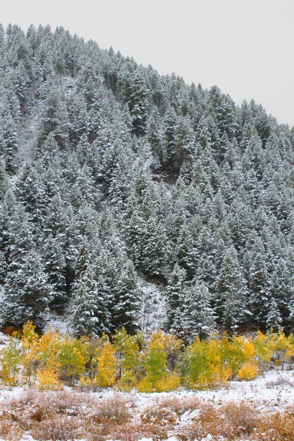 Bridger Las Państwowy Teton obrazy stock