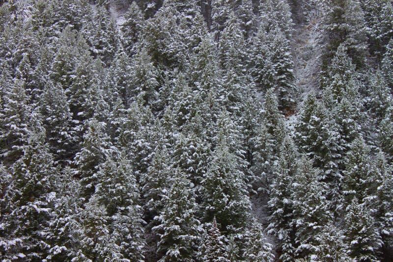 Bridger Teton国家森林怀俄明 免版税库存照片