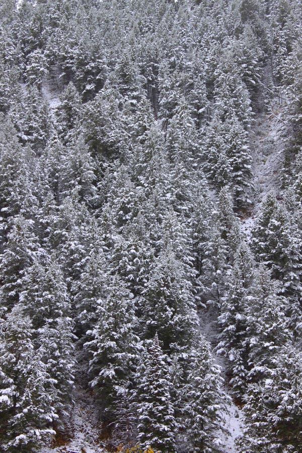 Bridger Teton国家森林怀俄明 库存照片