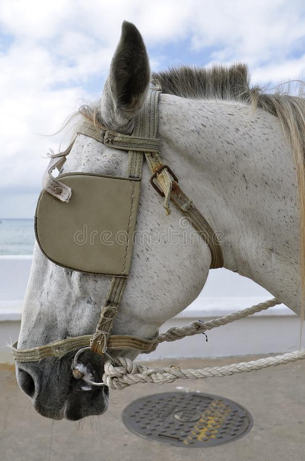 Bridle and blinds on a horse stock photos