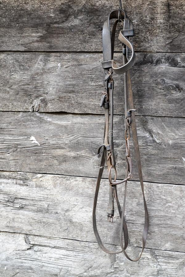 A bridle. A old bridle hanging on a Wall stock photos