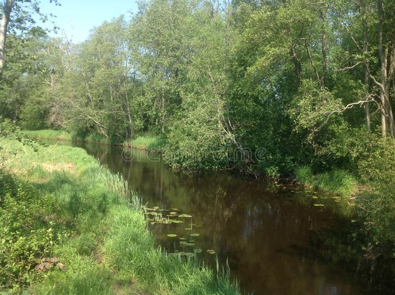 Download Briede stock photo. Image of nature, green, flower, river - 43562534
