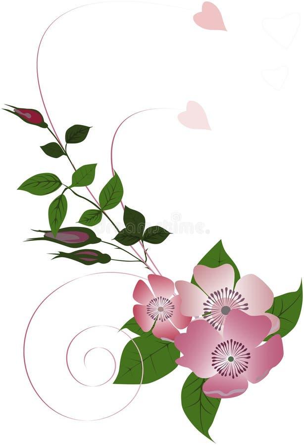 Download Brier curl decoration stock illustration. Image of ornamental - 10081571