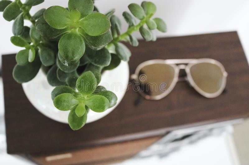 Bright and Airy Potted Jade Plant Succulent. Potted Jade Plant succulent - sitting next to aviator sunglasses on top of an old fashioned radio - in a bright and royalty free stock image