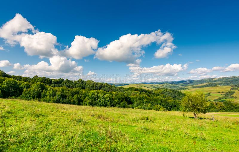 Fluffy clouds on a blue sky above rural landscape stock image