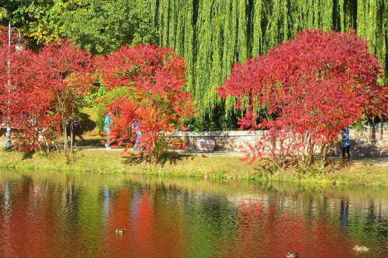 Bright autumn landscape - red and green trees on the shore of the lake are reflected in the water. stock photography