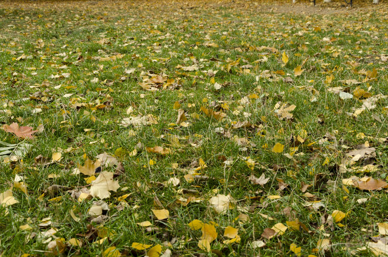 Bright autumn leaves on the green grass. stock photography