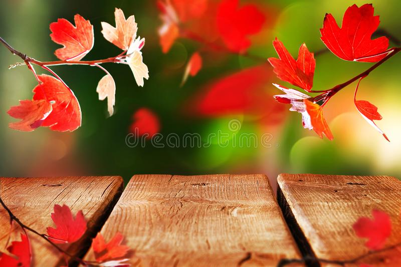 Bright  autumn natural background with wooden surface. Red leaves in the autumn forest. Wooden old table for your design and text. royalty free stock photo