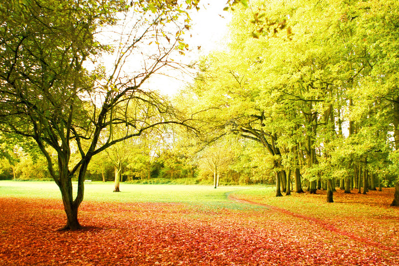 Download Bright autumn scenery stock image. Image of autumn, golden - 3353659