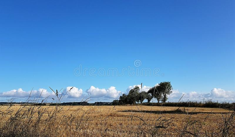 Bright Autumn Sky Through a Line of Grass. Bright blue autumn sky. A line of clouds on the horizon over a harvested field stock images