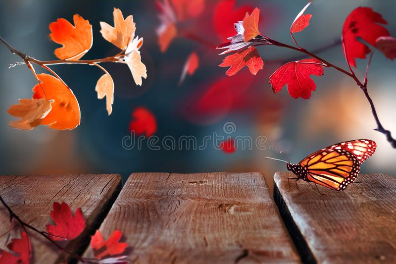 Bright  autumn summer natural background with wooden surface. Red leaves and butterfly in the autumn forest. royalty free stock photography