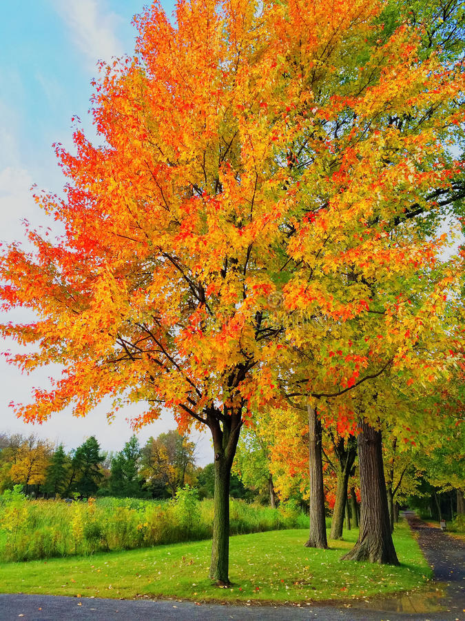 Free Bright Autumn Trees In A Park Stock Photo - 59691320