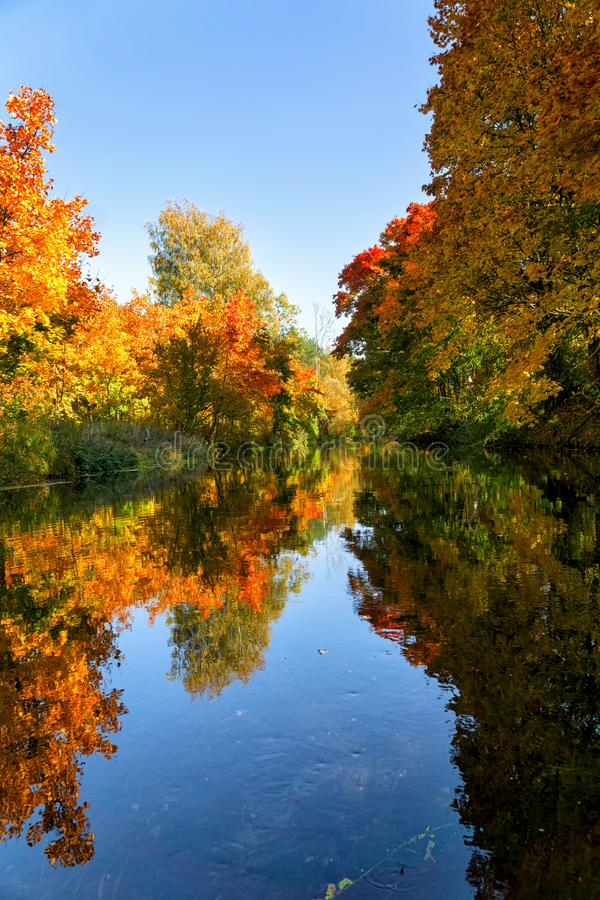 Bright autumn trees with their reflection in water. Autumn forest. Bright autumn trees with their reflection in water royalty free stock photos