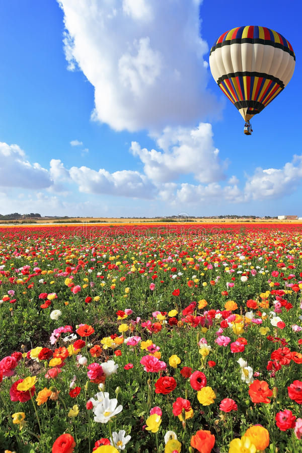 Download Bright Balloon Flies Over Field  Of Buttercups. Royalty Free Stock Photos - Image: 24761838