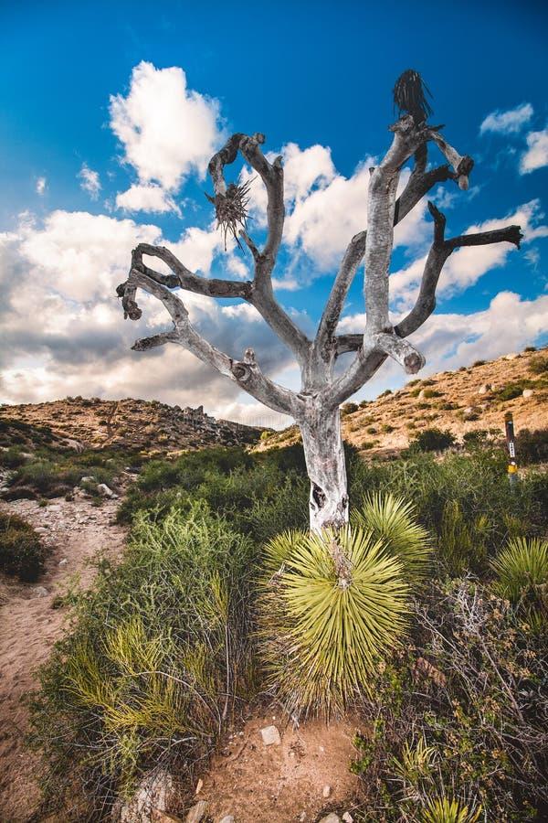 Bright bare tree stock image