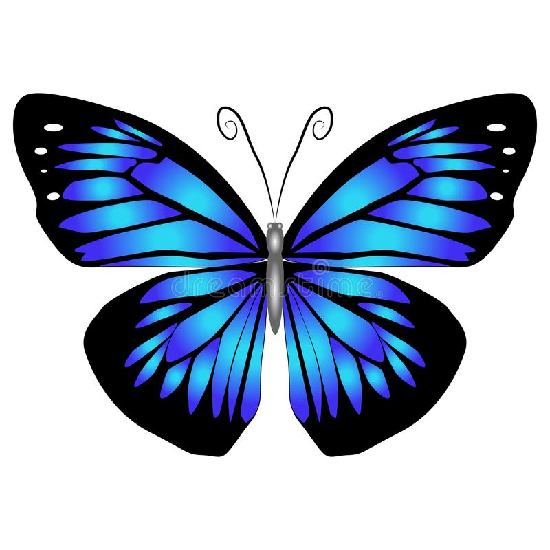 Bright beautiful blue butterfly. Vector illustration isolated. royalty free stock images