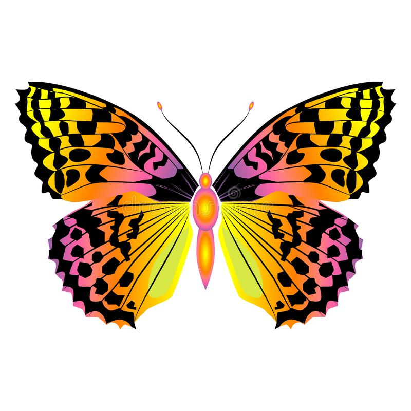Bright beautiful butterfly. Vector illustration isolated. stock photos