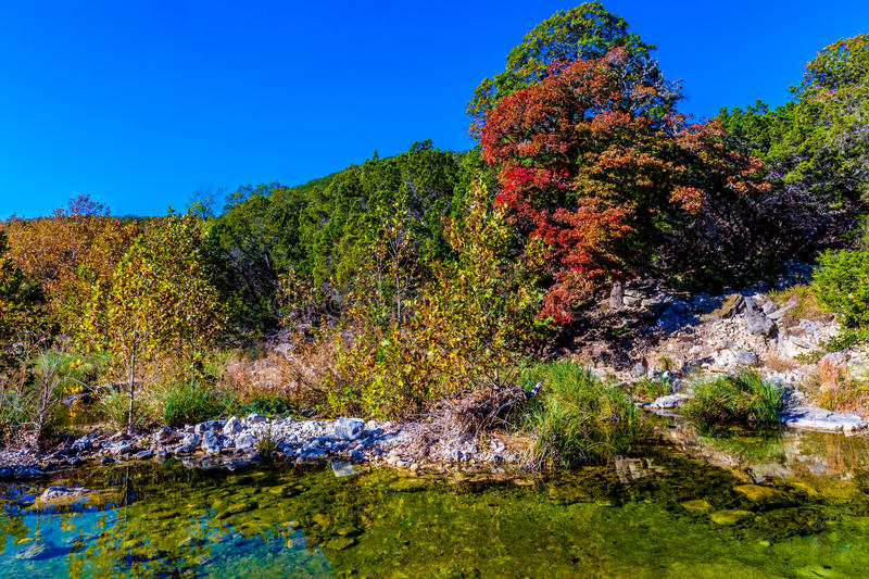 Bright Beautiful Fall Foliage on Stunning Maple Trees. In Lost Maples State Park, Texas stock photos
