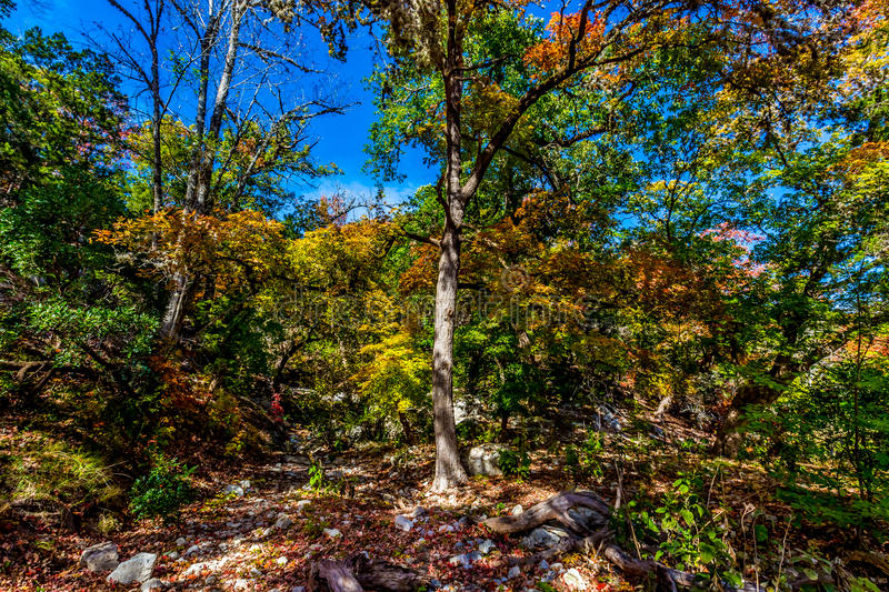 Bright Beautiful Fall Foliage on a Stunning Maple Trees in Texas. Bright Beautiful Colorful Fall Foliage on Stunning Maple Trees in Lost Maples State Park, Texas stock photo
