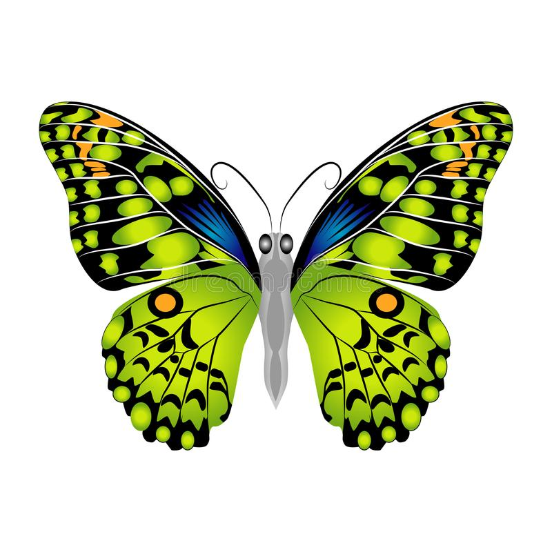 Bright beautiful green butterfly. Vector illustration isolated. stock photo