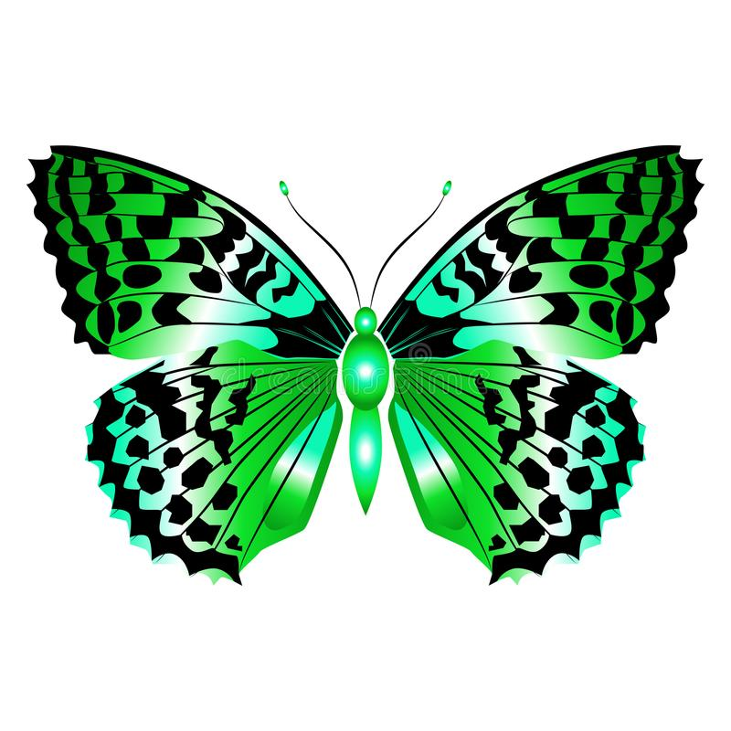 Bright beautiful green butterfly. Vector illustration isolated. stock image