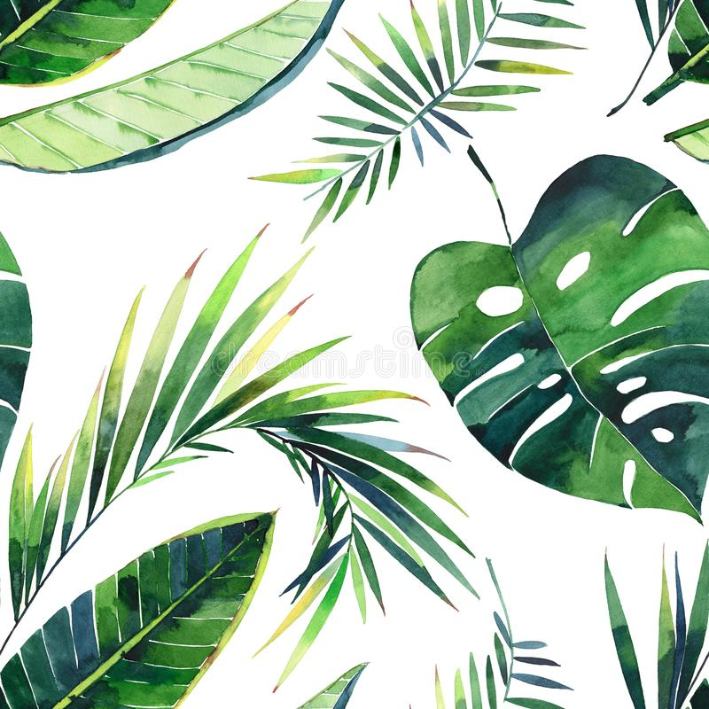 Bright beautiful lovely green herbal tropical wonderful hawaii floral summer pattern of a monstera banana tropic palm leaves vector illustration